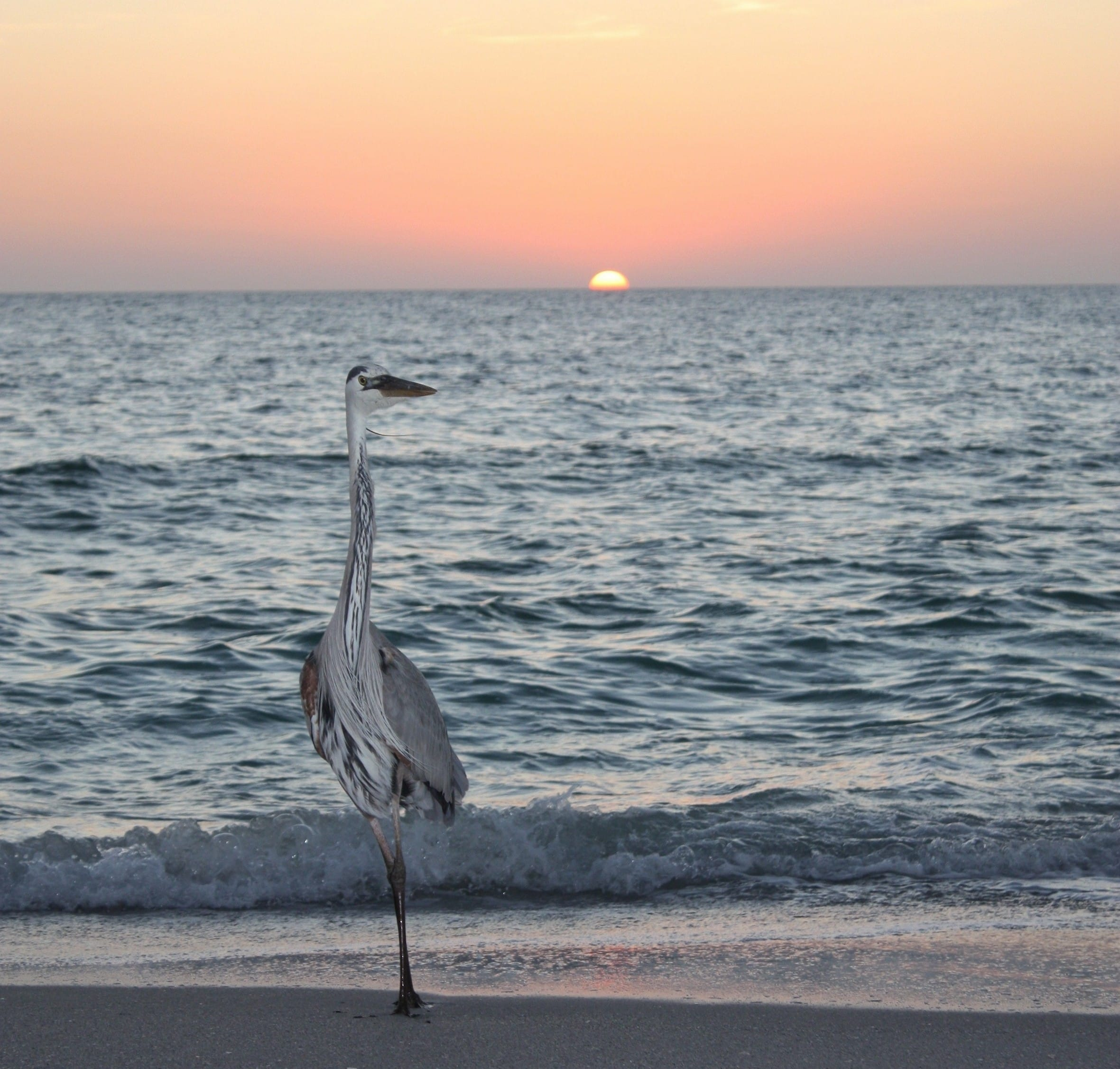 Sunset, Mucky Duck, Easter, Sanibel & Captiva Islands & Fort Myers Charters & Fishing Guide Service.