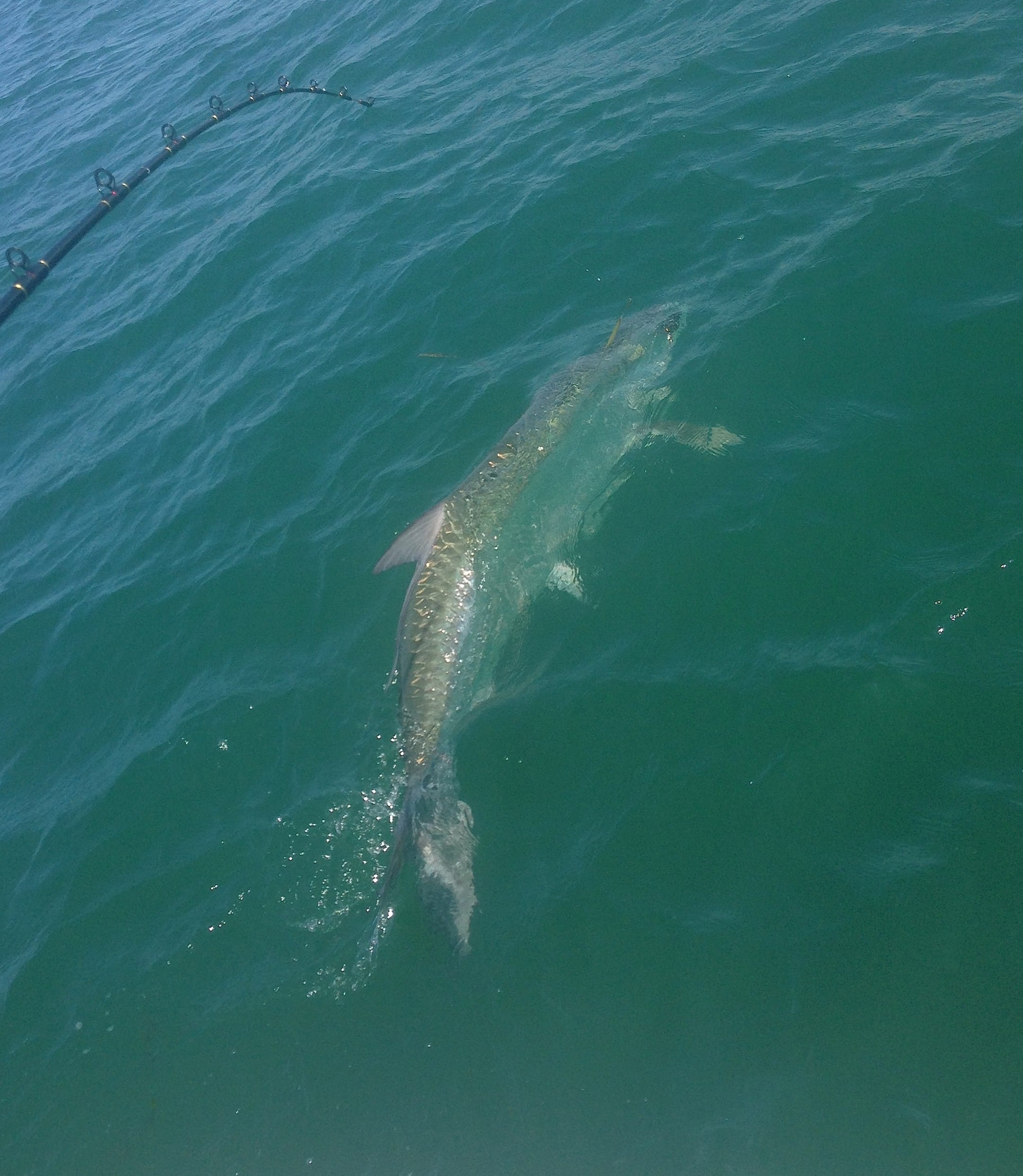 Captain Jon Zorian - Boca Grande Tarpon Fishing Guide ...