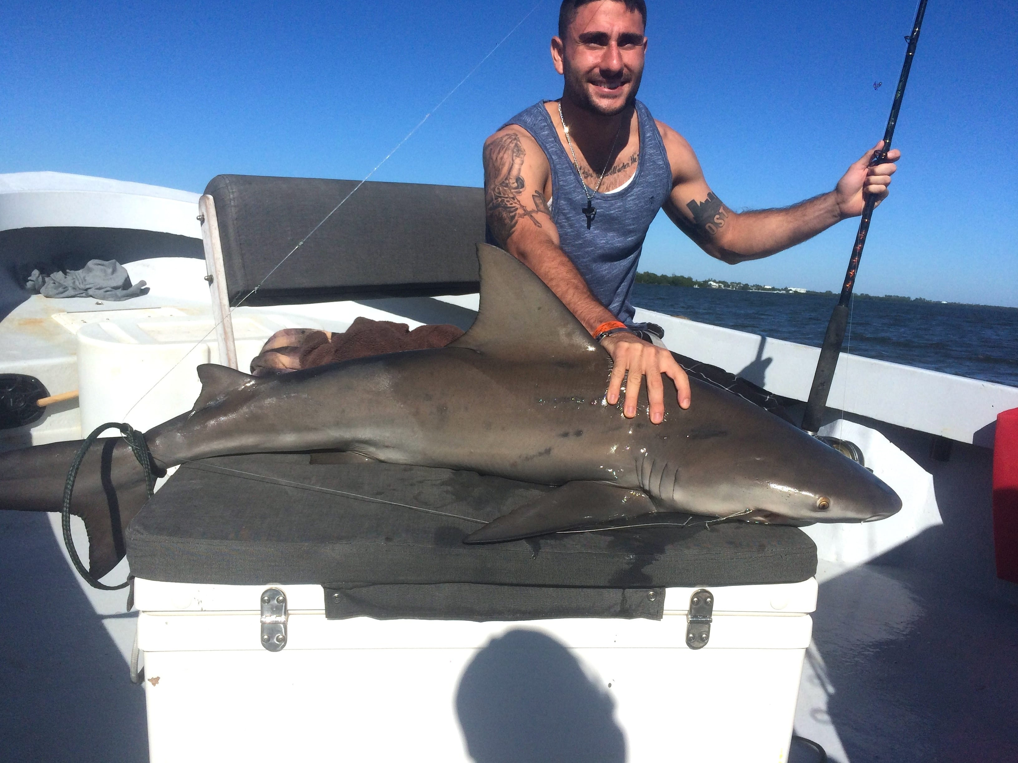 Bull shark, 10-26-14, Sanibel Fishing & Captiva Fishing & Fort Myers Fishing Charters & Guide Service.